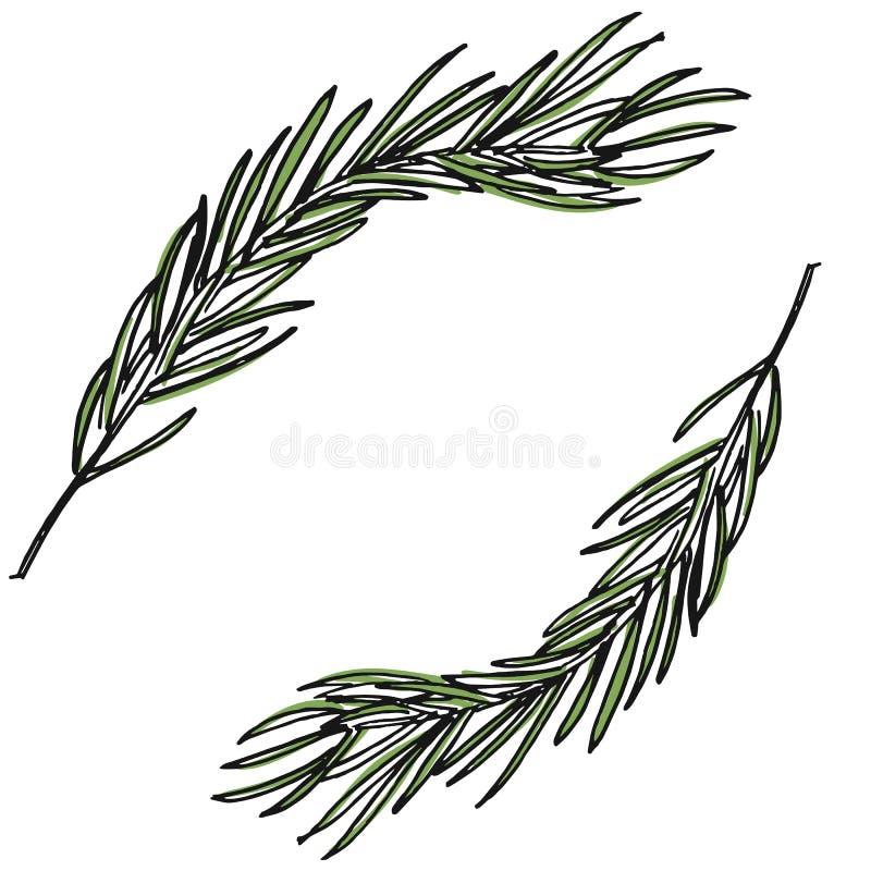L'illustration botanique avec le pin s'embranche, pin, tiré par la main photos stock