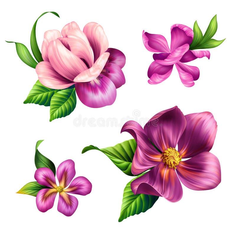 L'illustration botanique, belle nature tropicale, les fleurs roses le clipart (images graphiques), ensemble d'éléments de concept illustration de vecteur