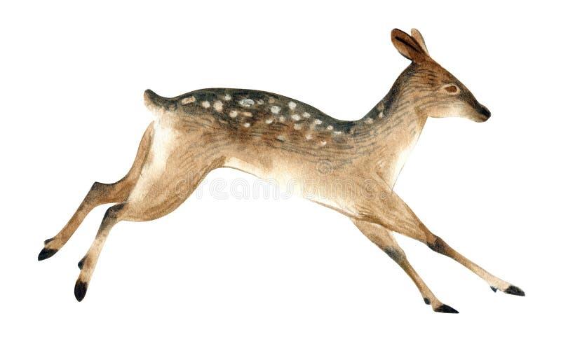 L'illustration d'aquarelle d'un cerf commun femelle brun saute Croquis réaliste des animaux sauvages de forêt illustration stock