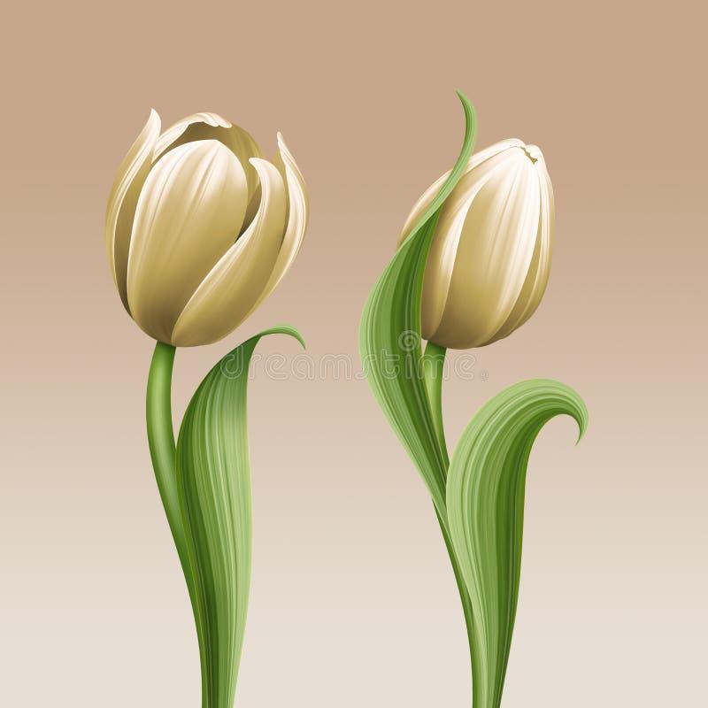 L'illustration florale de vintage blanc de tulipes, les fleurs d'isolement conçoivent des éléments illustration stock