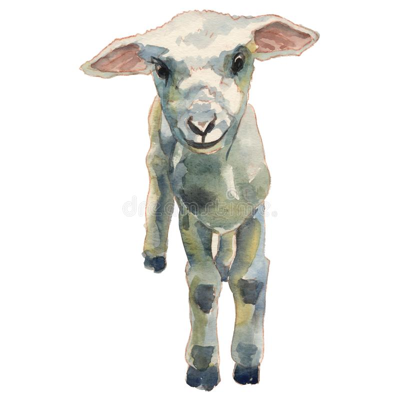 L'illustration peinte à la main d'aquarelle d'agneau illustration libre de droits