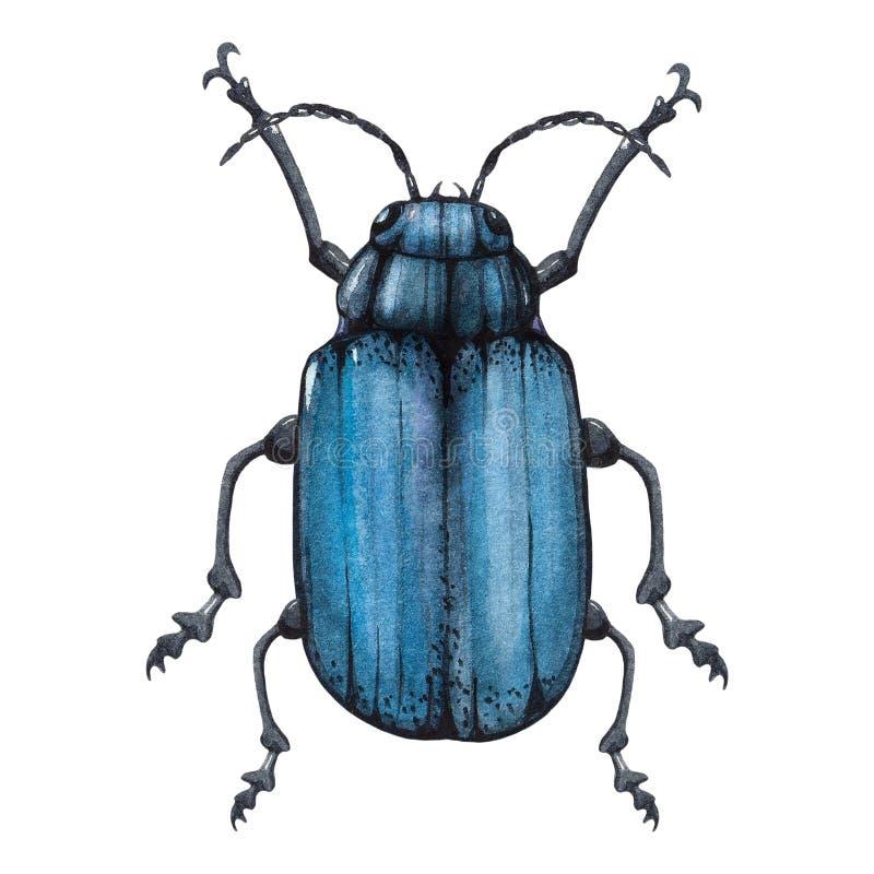 L'illustrazione blu dell'acquerello dell'insetto ha isolato illustrazione di stock