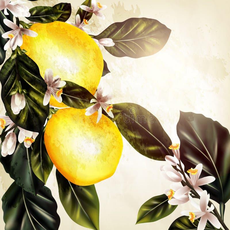 L'illustrazione con il limone realistico di vettore su una fioritura si ramifica illustrazione vettoriale