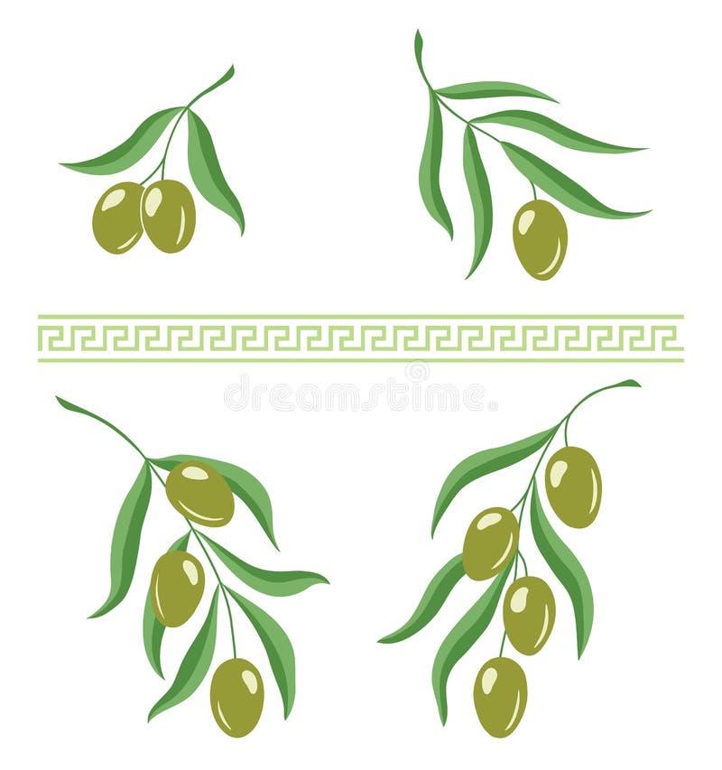 L'illustrazione dei rami di ulivo e i meandros greci ornano la spazzola per progettazione fotografia stock libera da diritti