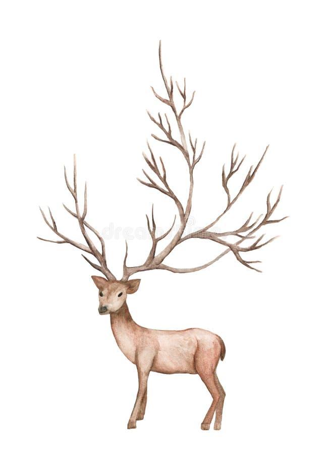 L'illustrazione dell'acquerello ha isolato i cervi, ramo di albero della montagna royalty illustrazione gratis
