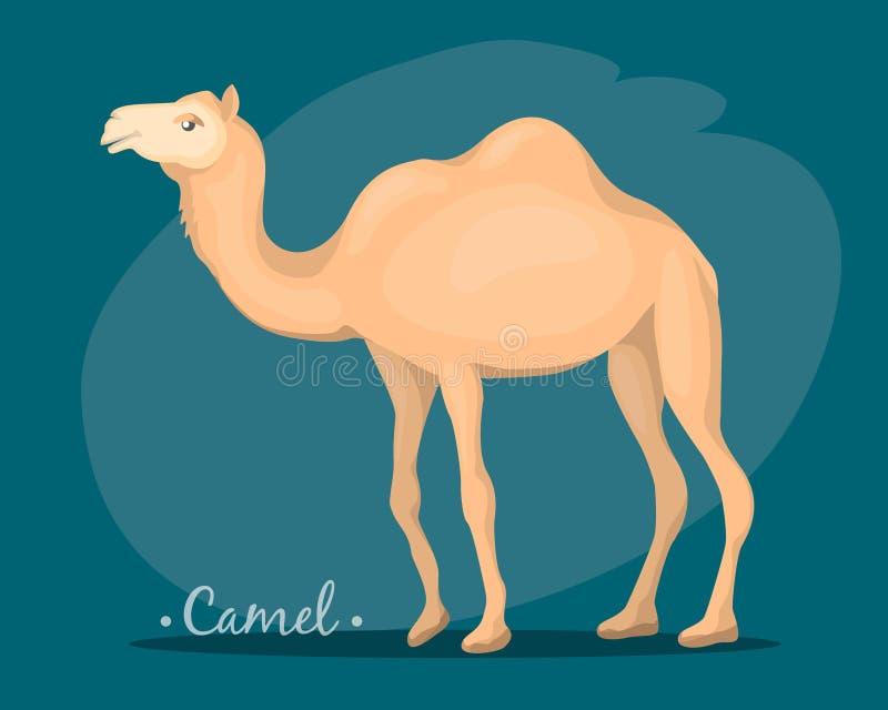 L'image d'un chameau illustration stock