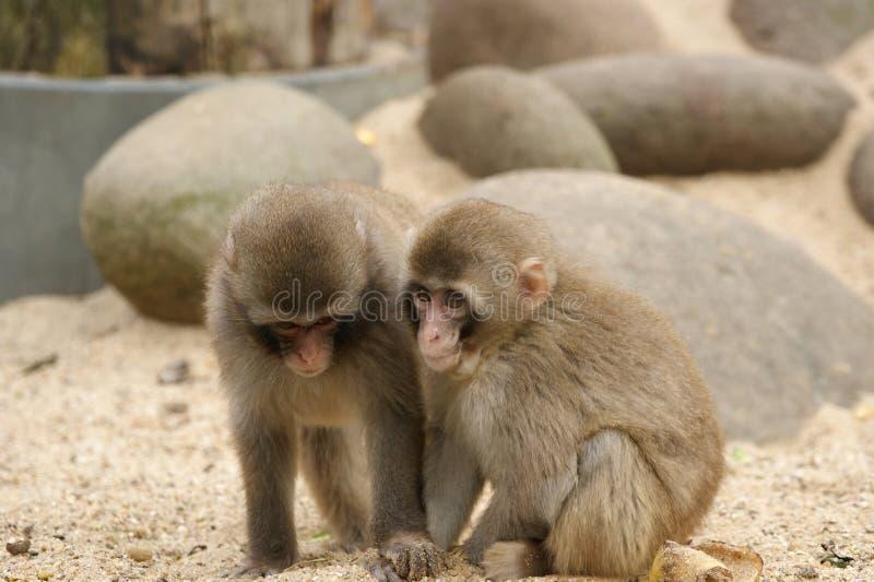 L'image de deux singes. photographie stock