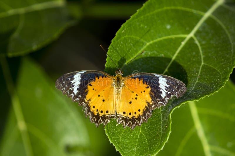 L'image du papillon était perché sur des feuilles sur le fond de nature images stock