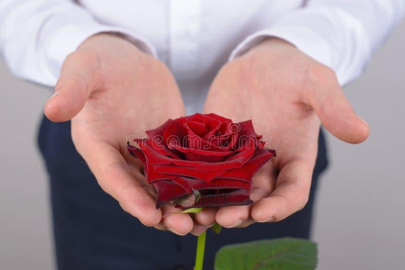 L'image en gros plan cultivée de photo de la rose avec du charme gentille assez belle avec les pétales idéaux a isolé le fond gri image stock