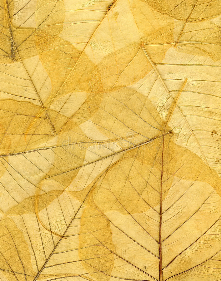 l'image tombée par fond d'automne laisse le jaune photos stock