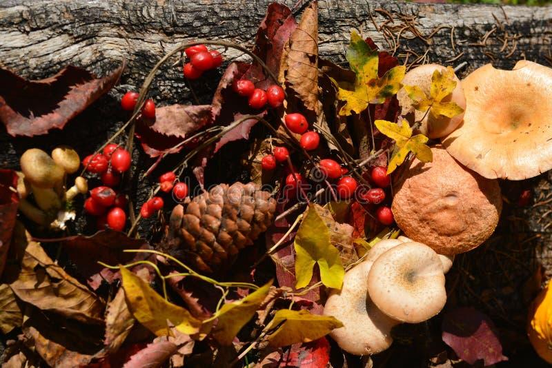 l'imagination de couleurs d'automne voient la saison la plus belle de l'année images stock