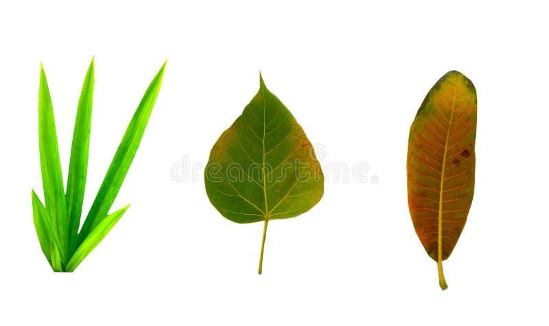 L'immagine è foglie gialle tagliate che cadono dall'albero fotografia stock