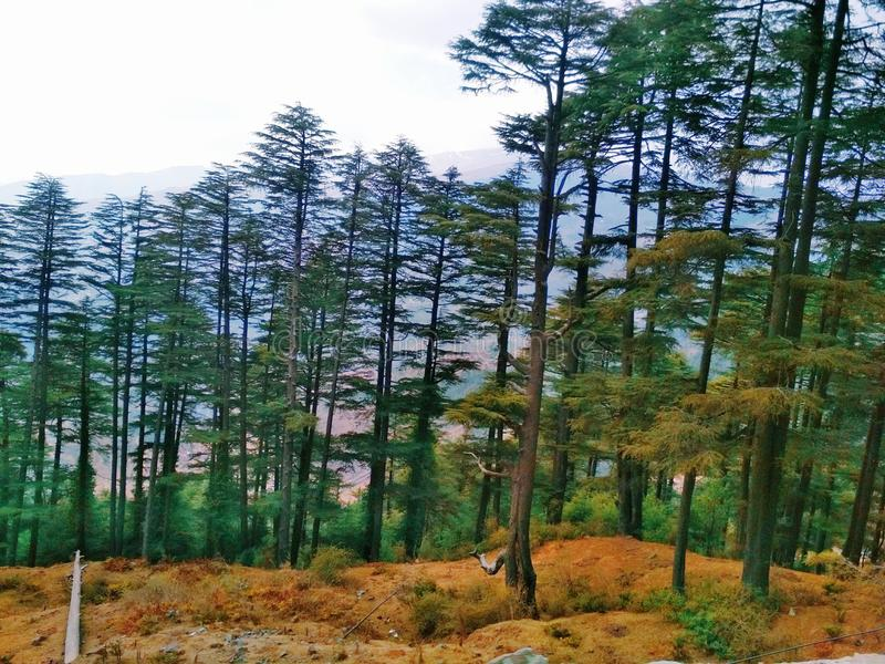 L'immagine dei lotti degli alberi fotografia stock