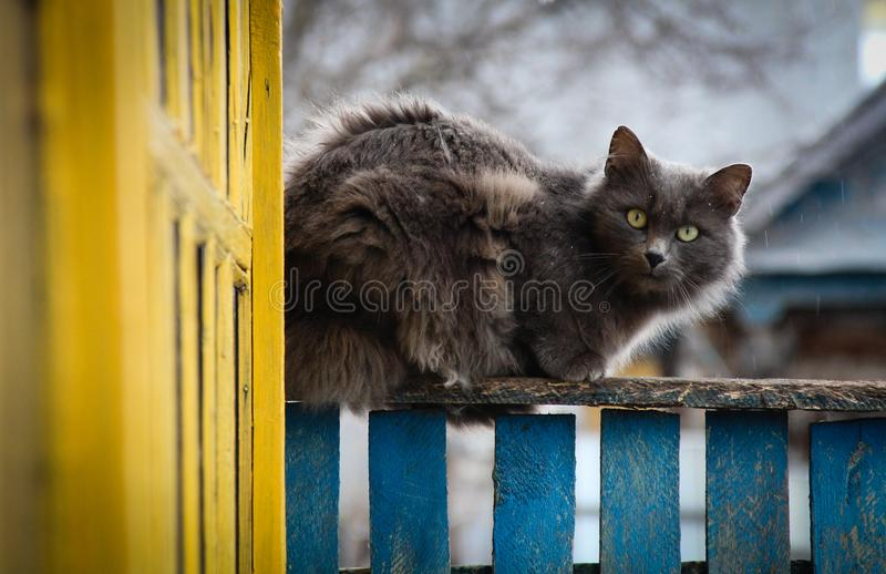 L'immagine del gatto di morninga di inverno che ha provato a sfuggire a fotografie stock libere da diritti