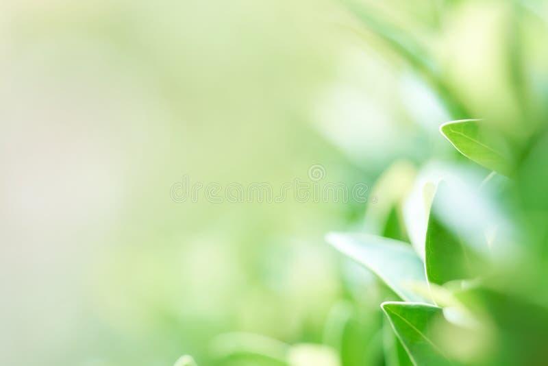 L'immagine di sfondo è foglie verdi confuse che ritengono rinfrescate a immagini stock libere da diritti