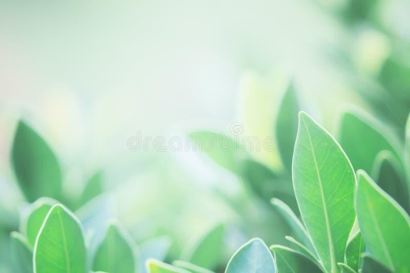 L'immagine di sfondo è foglie verdi confuse che ritengono rinfrescate a immagine stock libera da diritti