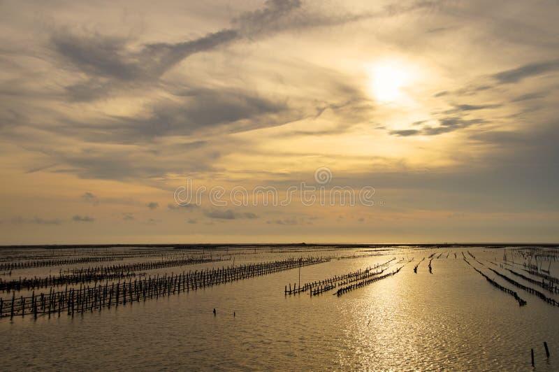 L'immagine di un'azienda agricola dell'ostrica nel tramonto immagine stock libera da diritti