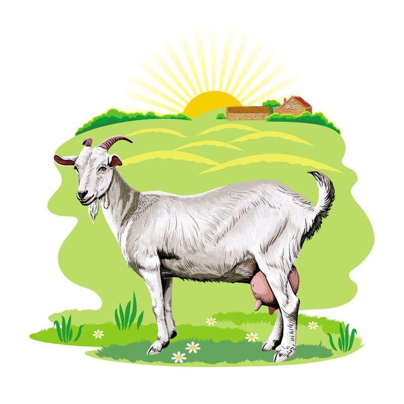 L'immagine di una capra che pasce in un pascolo royalty illustrazione gratis