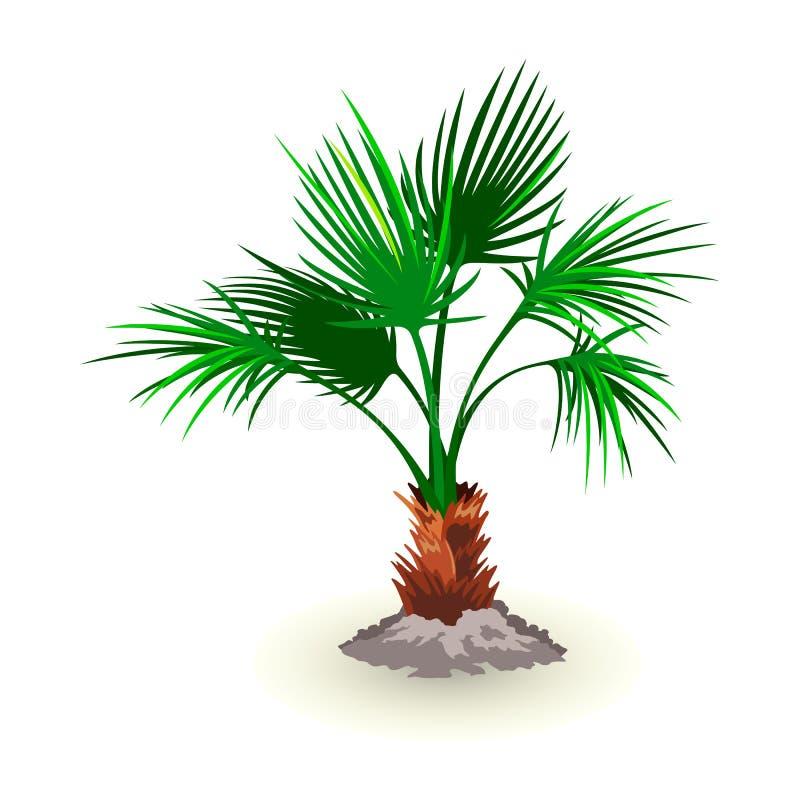 L'immagine isolata di vettore mostra le foglie nane dell'albero del palmetto illustrazione di stock