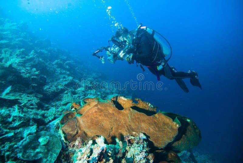 L'immersione con bombole subacquea dell'operatore subacqueo del fotografo di fotografia bunaken l'oceano della scogliera dell'Ind fotografia stock