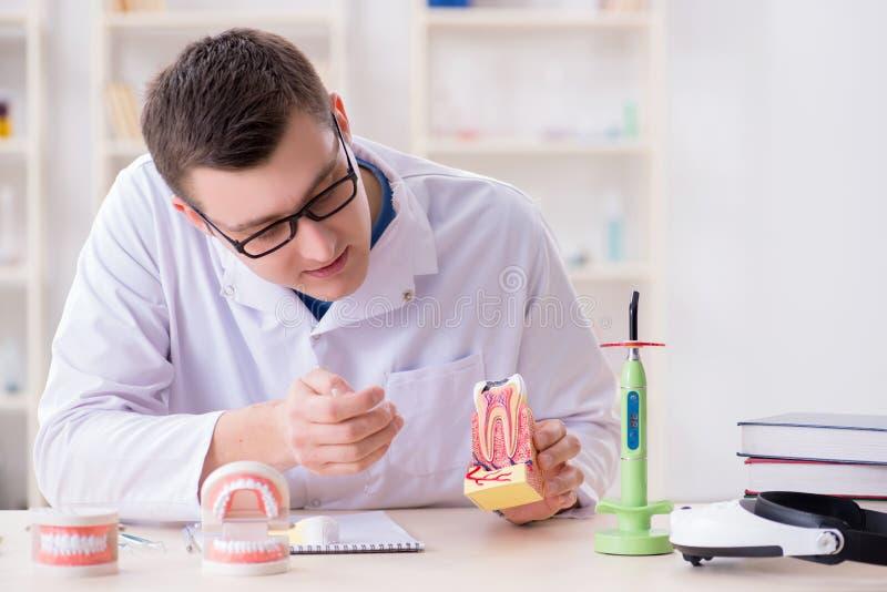 Download L'impianto Funzionante Dei Denti Del Dentista In Laboratorio Medico Fotografia Stock - Immagine di ortodontico, modello: 117977860