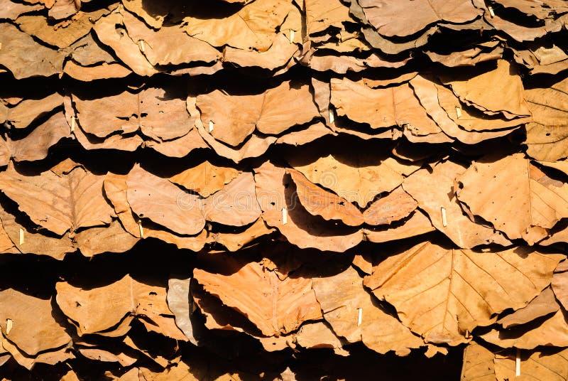 L'impilamento del tek secco lascia sotto forti luce ed ombra in nordico della Tailandia fotografie stock libere da diritti