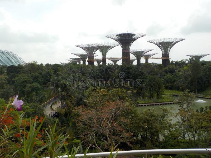 L'impressionnant, suspendu dans le ciel fait du jardinage par la baie, Singapour photo stock