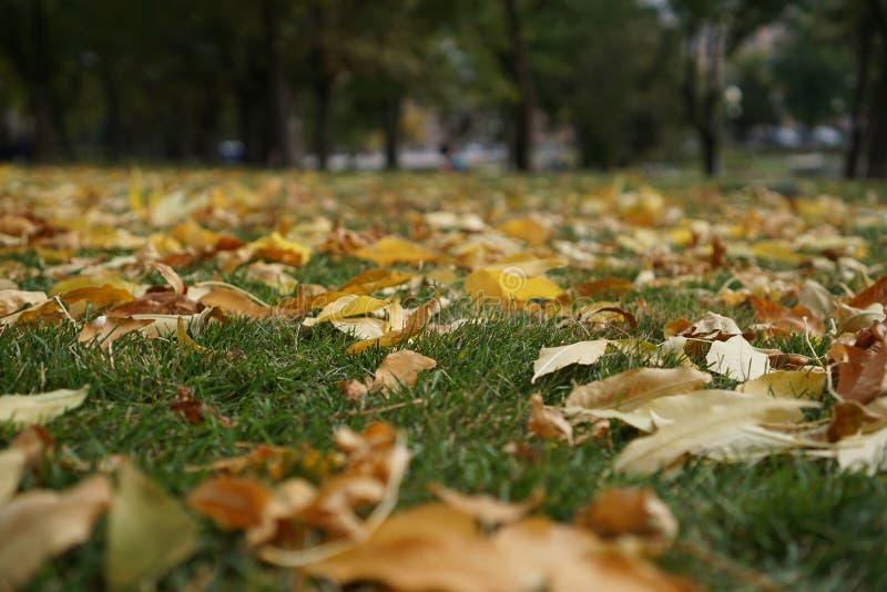 L'incanto dell'autunno, dell'erba e delle foglie di giallo fotografia stock libera da diritti