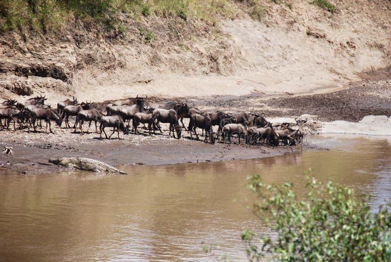 L'incrocio nel Kenya fotografia stock