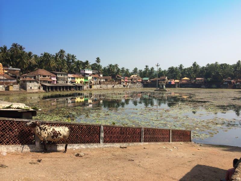 l'Inde Gokarna Vache sacrée à un réservoir sacré images stock