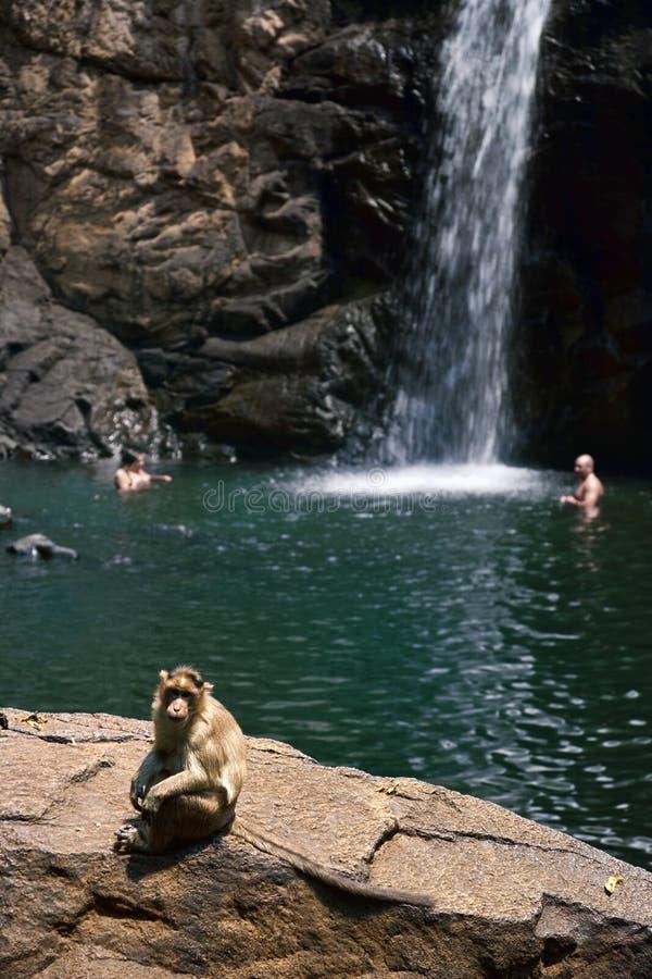 L'India - Goa - scimmia fotografia stock