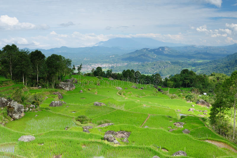 l'Indonésie, Sulawesi, Tana Toraja photographie stock libre de droits