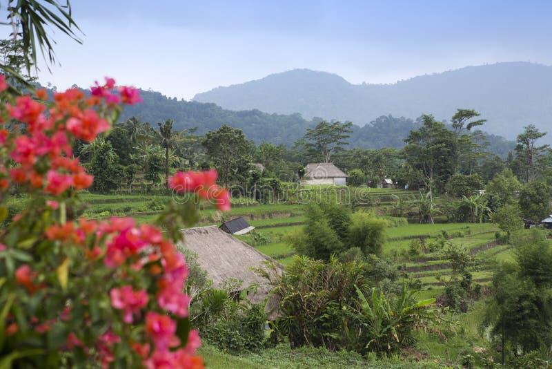 l'indonesia bali Giorno nuvoloso sopra i terrazzi tropicali del riso e della natura fotografia stock libera da diritti