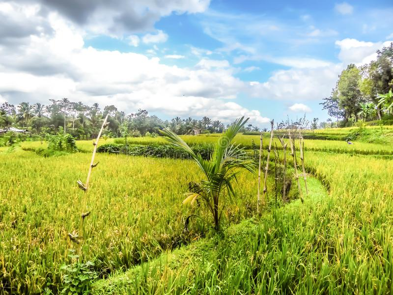 L'Indonesia - giacimento e nuvole del riso immagine stock