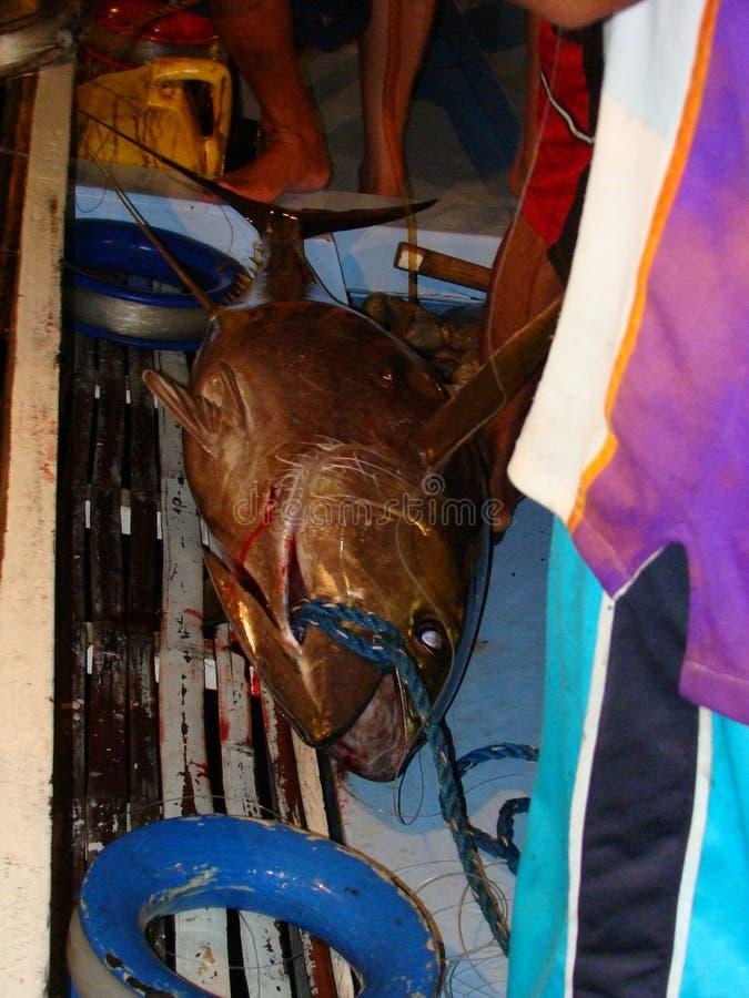L'industria della pesca artigianale del tonno albacora nelle Filippine è condotta alla notte, nelle vicinanze delle mode artigian immagine stock libera da diritti