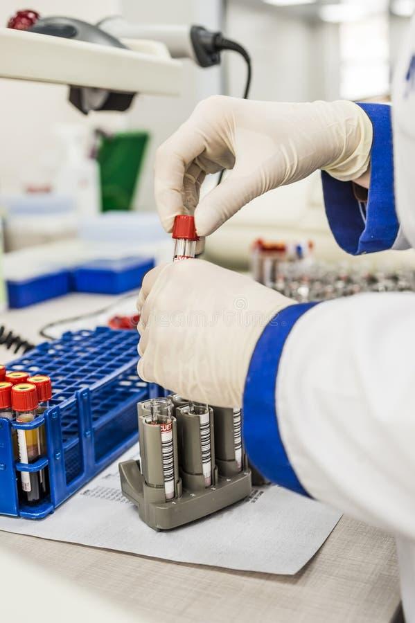 L'infirmière arrange des tubes à essai avec le sang sur un plateau image stock
