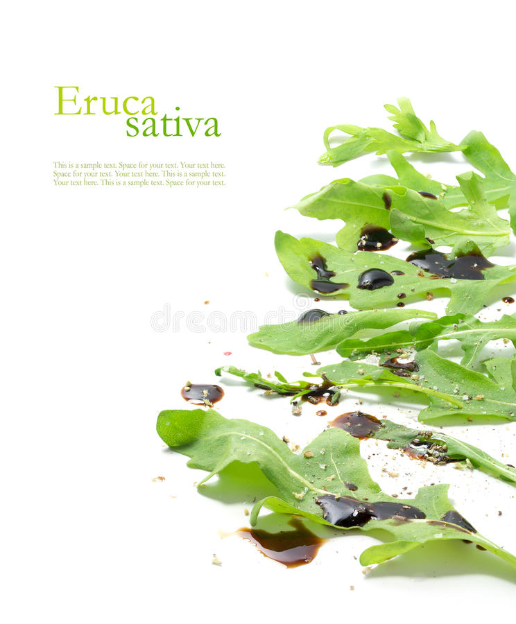 L'insalata di razzo verde fresca va, eruca sativa, rucola o rucola fotografie stock libere da diritti