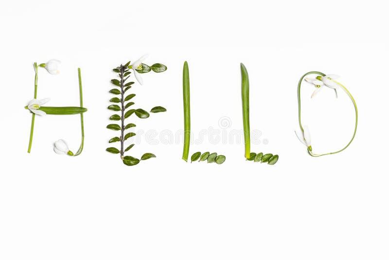 L'inscription des feuilles vertes fra?ches sur un fond blanc bonjour Les salutations jaillissent postcard Foyer s?lectif photos stock