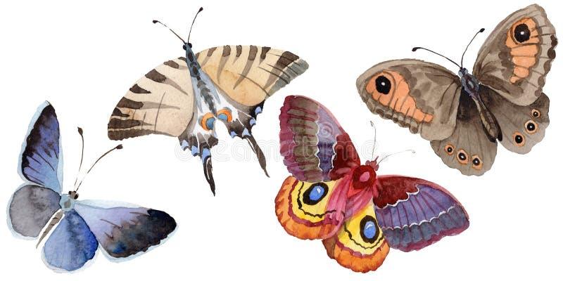 L'insecte d'offre de papillon d'aquarelle, mite intresting, a isolé l'illustration d'aile illustration stock