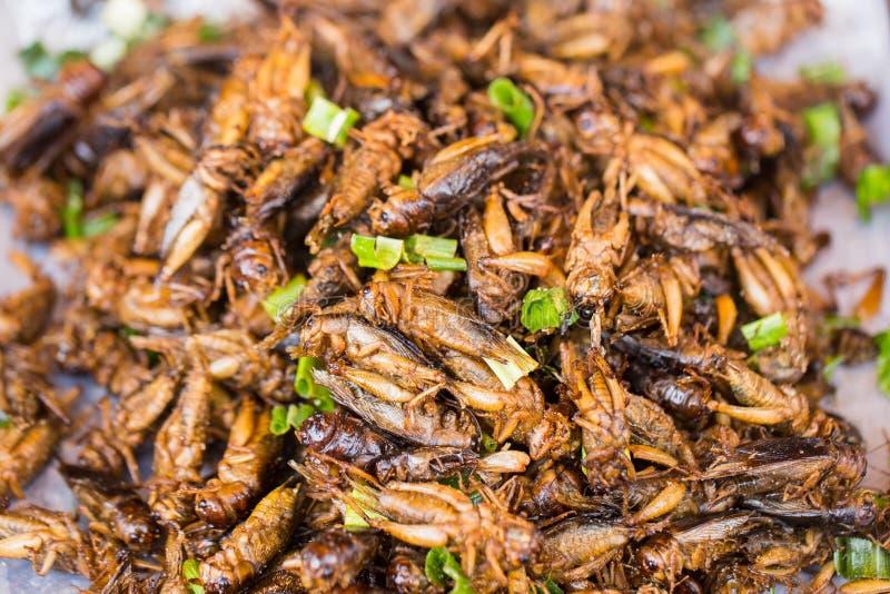 L'insecte de cricket a fait frire le casse-croûte asiatique d'insecte, nourriture à haute valeur protéique photographie stock