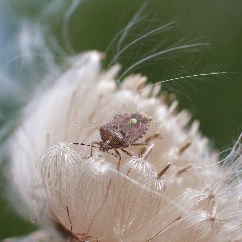 L'insecte se repose sur une fleur blanche image libre de droits