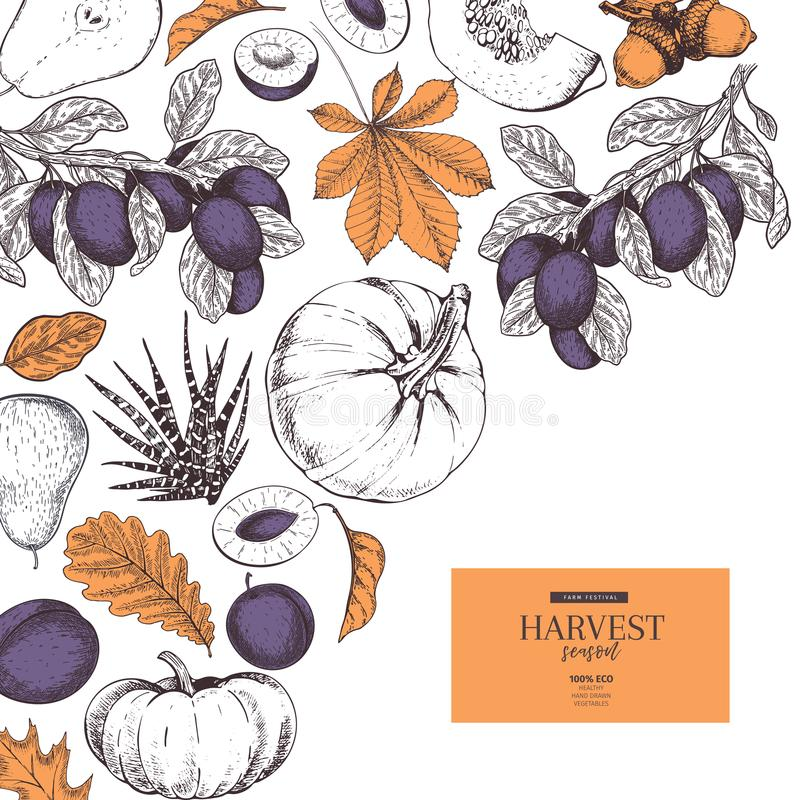 L'insegna disegnata a mano del raccolto di autunno fruttifica, verdure Stile inciso annata di vettore Zucca, prugna, quercia, map royalty illustrazione gratis