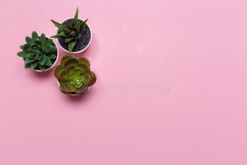 L'insegna o l'intestazione dei succulenti con differenti piante su una morbidezza arrossisce fondo rosa immagine stock libera da diritti