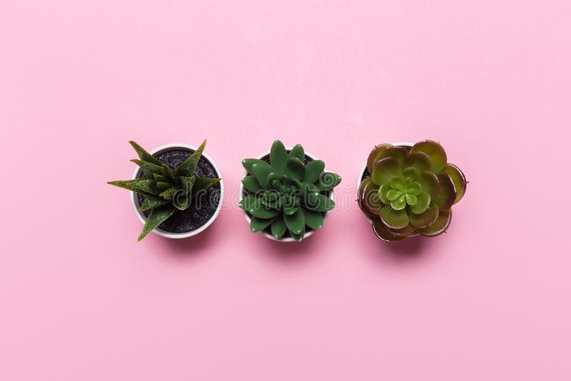 L'insegna o l'intestazione dei succulenti con differenti piante su una morbidezza arrossisce fondo rosa immagine stock