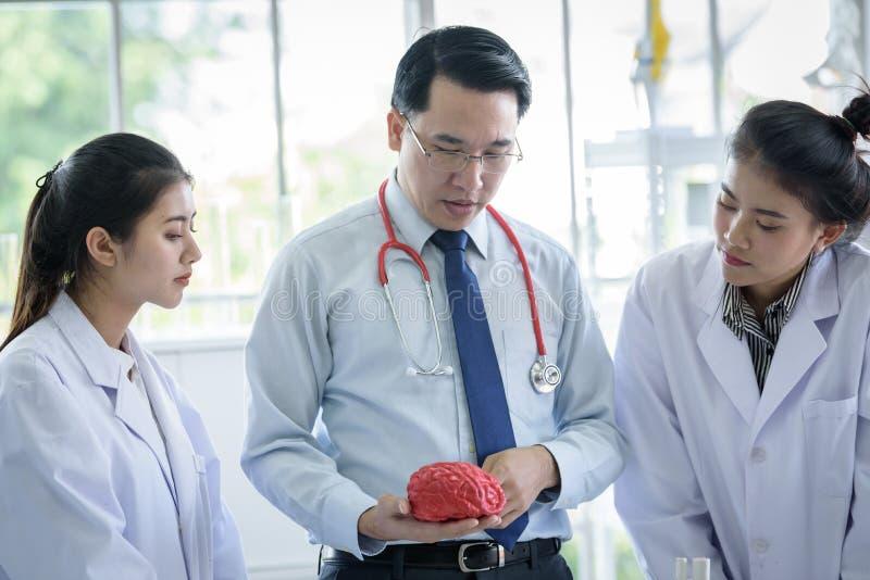 L'insegnante ha insegnamento allo studente circa scienza ed anatomico asiatici in laboratorio fotografia stock libera da diritti
