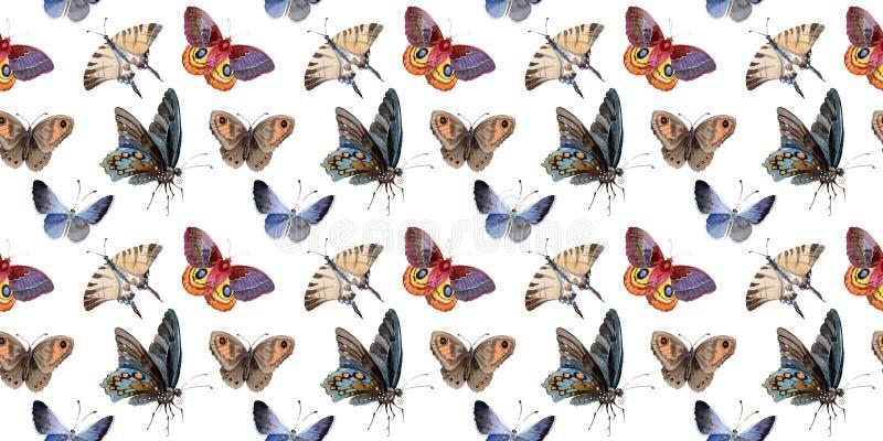 L'insetto dell'offerta della farfalla dell'acquerello, lepidottero intresting, ha isolato l'illustrazione dell'ala royalty illustrazione gratis