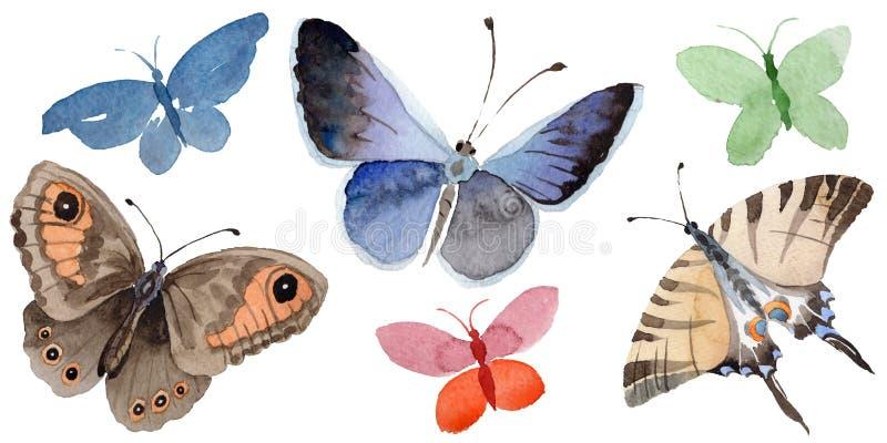 L'insetto dell'offerta della farfalla dell'acquerello, lepidottero intresting, ha isolato l'illustrazione dell'ala illustrazione di stock