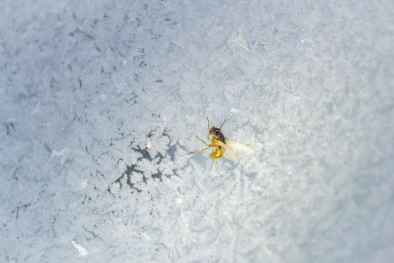 L'insetto sulla finestra fotografia stock libera da diritti