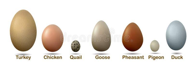 L'insieme degli uccelli differenti eggs con il insctiption, tacchino, anatra, oca, pollo, piccione, quaglia, uova del fagiano, illustrazione vettoriale