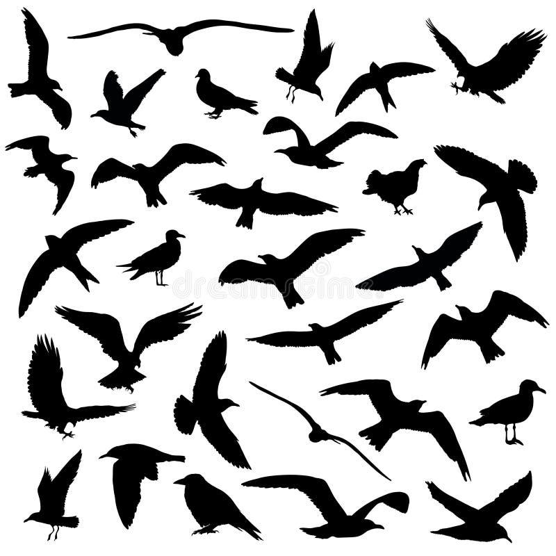 L'insieme degli uccelli profila 30 in 1 su fondo bianco illustrazione di stock